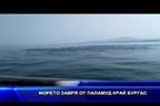 Морето завря от паламуд край Бургас