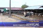 Поредният удар върху родното животновъдство