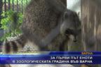 За първи път еноти в зоологическата градина във Варна