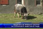 Общините не прилагат контрол за стопанските животни из града
