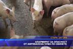 Алармират за опасност от африканска чума по свинете