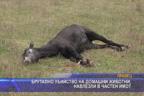 Брутално убийство на домашни животни, навлезли в частен имот