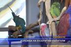 Изложба на екзотични папагали