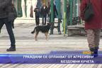 Граждани се оплакват от агресивни бездомни кучета