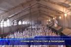 Огнище на птичи грип в Пазарджик