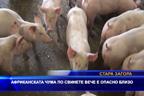 Африканската чума по свинете вече е опасно близо