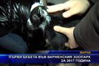 Първи бебета във варненския зоопарк за 2017 година