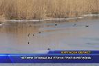 Четири огнища на птичи грип в региона