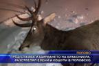 Продължава издирването на бракониера, разстрелял елени и кошути в Поповско