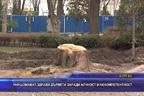 Унищожават здрави дървета заради алчност и некомпетентност