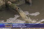 Свинеферма замърсява водата на обществените чешми