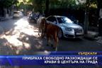 Прибраха свободно разхождащи се крави в центъра на града