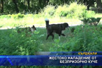 Жестоко нападение от безпризорно куче