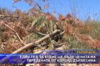 Един лев за кубик ще бъде цената на увредената от корояд дървесина