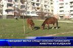 Обещават мерки срещу селскостопанските животни из Кърджали