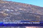 Пожар опустоши млада гора над кв. Лозенец