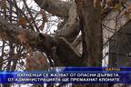 Варненци се жалват от опасни дървета, администрацията ще премахне клоните