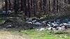 Поредната гора превърната в депо за отпадъци