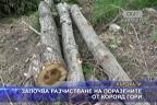 Започва разчистване на поразените от корояд гори