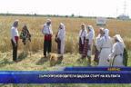 Зърнолроизводители дадоха старт на жътвата