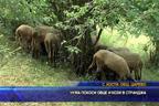 Чума покоси овце и кози в Странджа