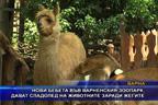 Нови бебета във варненския зоопарк, дават сладолед на животните заради жегите