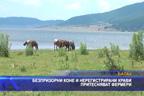 Безпризорни коне и нерегистрирани крави притесняват фермери