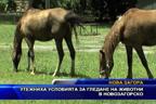 Утежниха условията за гледане на животни в новозагорско