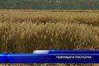 Пшеницата поскъпна