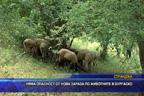 Няма опасност от нова зараза по животните в Бургаско