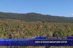 Криза в лозаро-винарския сектор