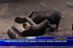 Намериха мъртво диво прасе край Силистра