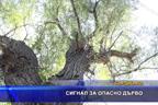Сигнал за опасно дърво