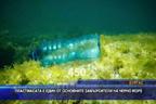 Пластмасата е един от основните замърсители на Черно море