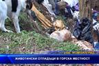 Животински отпадъци в горска местност