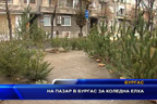 На пазар в Бургас за коледна елха
