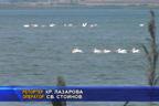 Птици зимуват край бургаските езера