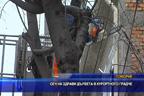 Сеч на здрави дървета в курортното градче Поморие