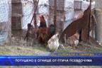 Потушено е огнище от птича псевдочума край Кърджали