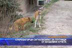 Глутници от бездомни кучета - Стара Загора