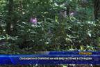 Сензационно откритие на нов вид растение в Странджа