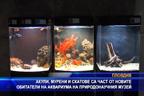 Акули, мурени и скатове са част от новите обитатели на аквариума на Пиродонаучния музей