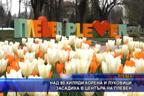 Над 80 хиляди корена и луковици засадиха в центъра на Плевен