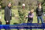 Атласки кедър ще расте в Морската градина на Бургас