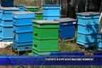 Пчелите в бургаско масово измират