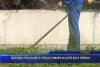 Започна пръскането срещу комари и кърлежи в Плевен