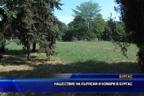 Нашествие на кърлежи и комари в Бургас