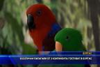Екзотични папагали от 3 континента гостуват в Бургас