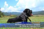 Обучението на кучетата и стопаните им трябва да е задължително