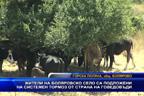 Жители на боляровско село са подложени на системен тормоз от страна на говедовъди